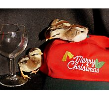 Serves You Right For Drinking All The Wine... -Duck Wing Chicks - NZ Photographic Print