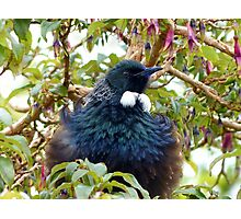 Ever Heard Of Blue Pollen? - Well... Look At My Face...Tui - NZ Photographic Print