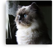 Sentry: A Feline Perspective Canvas Print