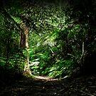 Trekking down by Anuja Manchanayake
