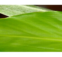 Natures Pinstripes-#2- Photographic Print