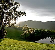 After the Storm # 1 - Audrey Wilkinson Vineyard- Hunter Valley, Australia by anotherdonkeyd