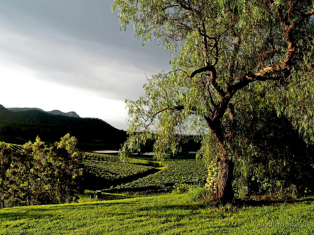 After the Storm # 2 - Audrey Wilkinson Vineyard - Hunter Valley, Australia by anotherdonkeyd