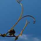 Vine Twist in the Sky - Millfield, Hunter Valley by anotherdonkeyd