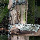 This Old Gate by coffeebean