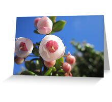 Flowers - Chilean fuchsia Greeting Card