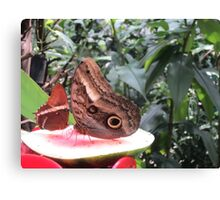 Butterflies  Iguazu Falls - Argentina Canvas Print