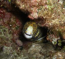 Moray - Sunabae - California by Michael Powell