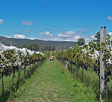 Hunter Valley Reds - Millfield, Hunter Valley by anotherdonkeyd