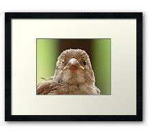 Wink...Wink... Sparrow - NZ Framed Print