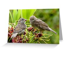 I Said...We're Leaving Home... - Sparrow Release - NZ Greeting Card