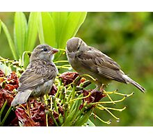 I Said...We're Leaving Home... - Sparrow Release - NZ Photographic Print