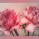 Simply Carnations by budrfli