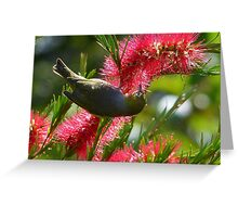 I Know It's In Here Somewhere!! - Silver-Eye On Bottle Brush - NZ Greeting Card