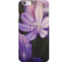 Agapanthus Liliaceae I iPhone Case/Skin