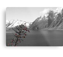 Winter's fruit Metal Print
