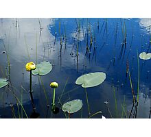 Lily Pads in Pond Photographic Print
