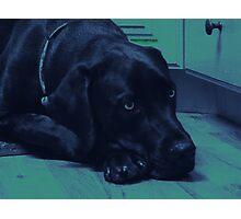 Mastador - Blue Green Photographic Print