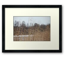 reeds cold winter wind Framed Print