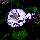 Purple Trumpet Flower by caroleann1947