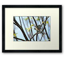 Frenzied Bluebird Female Framed Print