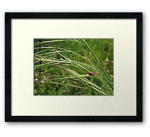 Spring Mating Framed Print