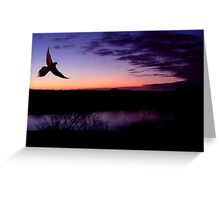 Dove In Flight At Sunset Greeting Card