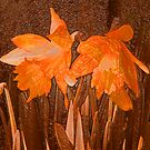 Daffodils by Tracy Bollinger