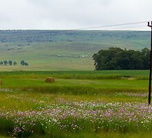 Country View, Natal, South Africa by Qnita