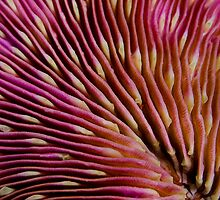 Hard coral by vinny turner