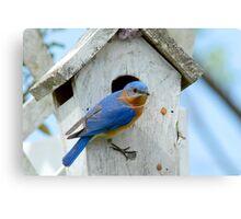 Nest Building Time Canvas Print