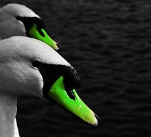 Green beackers by adriano