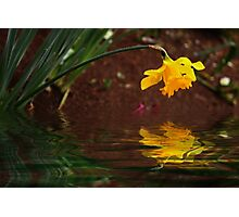 Daffodil Reflection Photographic Print