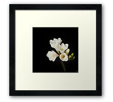 Purity: A White on Black Floral Study Framed Print