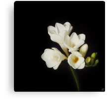 Purity: A White on Black Floral Study Canvas Print