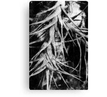 Epiphyte Canvas Print