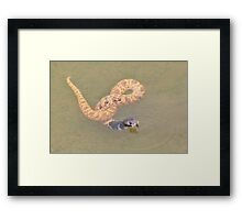 Shield Nose Snake - All Tied Up Framed Print