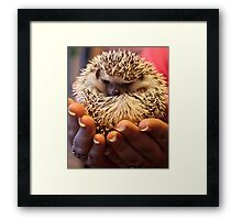 Mr Hedgehog Framed Print