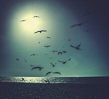 A Flock of Seagulls by Matthew Hollinshead
