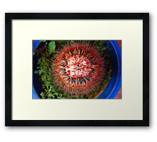 Ugly and Beautiful Framed Print