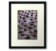 Path of thorns Framed Print