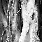 Eldritch Tree by olga zamora