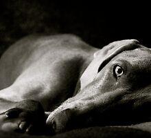 A dog's life... by Lisa Utronki