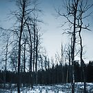 Forest in winter by Antanas