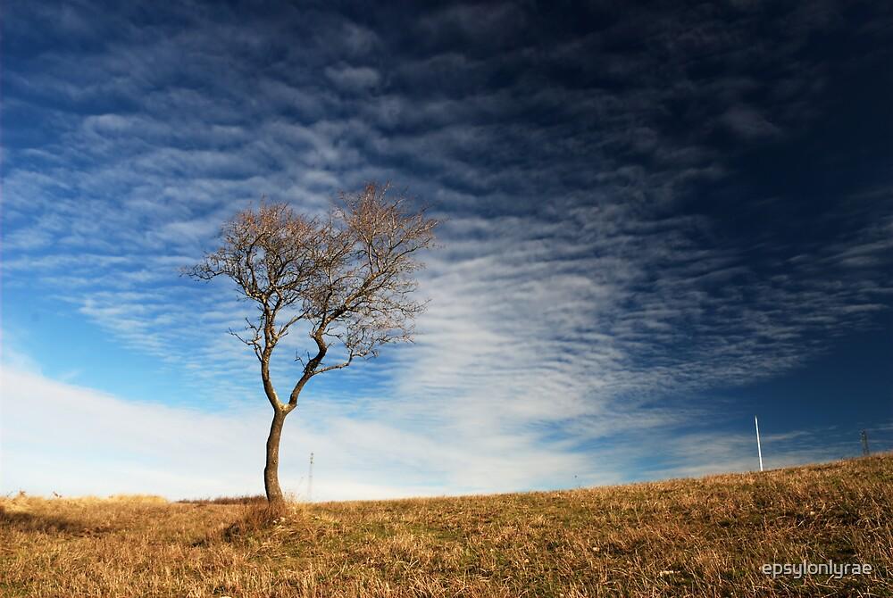 Lonely tree by epsylonlyrae