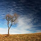 Lonely tree by epsylonlyrae