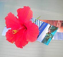 Carribean Color by Jenny Kalasho
