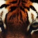 Tiger Eyes by MichelleRees