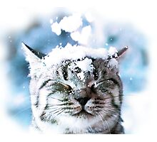 Snow Cat  Photographic Print