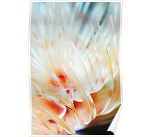 Feather soft  Poster